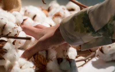 China cotton project