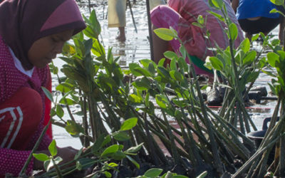 Livelihoods-Mangrove restoration project in Indonesia: revitalizing coastal villages with fishery, new businesses & improved livelihoods