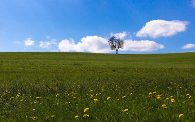 What is Regenerative Agriculture?
